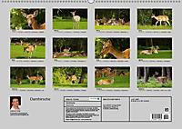 Damhirsche (Wandkalender 2019 DIN A2 quer) - Produktdetailbild 1