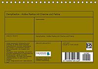 Dampfradios - Antike Radios mit Charme und Patina (Tischkalender 2019 DIN A5 quer) - Produktdetailbild 13