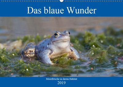Das blaue Wunder - Moorfrösche in ihrem Habitat (Wandkalender 2019 DIN A2 quer), Sabine Grahneis