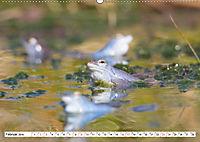 Das blaue Wunder - Moorfrösche in ihrem Habitat (Wandkalender 2019 DIN A2 quer) - Produktdetailbild 2