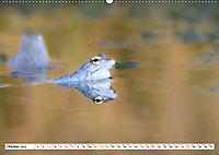 Das blaue Wunder - Moorfrösche in ihrem Habitat (Wandkalender 2019 DIN A2 quer) - Produktdetailbild 10