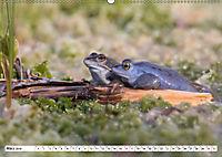 Das blaue Wunder - Moorfrösche in ihrem Habitat (Wandkalender 2019 DIN A2 quer) - Produktdetailbild 3