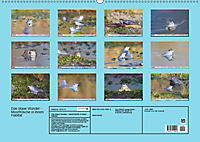 Das blaue Wunder - Moorfrösche in ihrem Habitat (Wandkalender 2019 DIN A2 quer) - Produktdetailbild 13