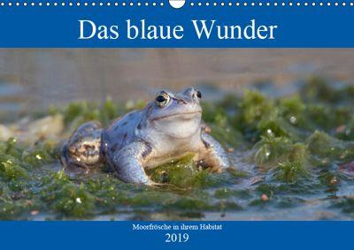 Das blaue Wunder - Moorfrösche in ihrem Habitat (Wandkalender 2019 DIN A3 quer), Sabine Grahneis