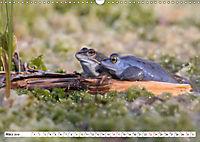 Das blaue Wunder - Moorfrösche in ihrem Habitat (Wandkalender 2019 DIN A3 quer) - Produktdetailbild 3