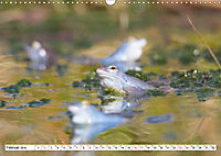 Das blaue Wunder - Moorfrösche in ihrem Habitat (Wandkalender 2019 DIN A3 quer) - Produktdetailbild 2