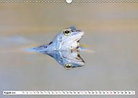 Das blaue Wunder - Moorfrösche in ihrem Habitat (Wandkalender 2019 DIN A3 quer) - Produktdetailbild 8