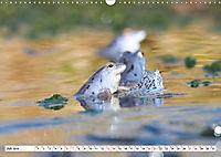 Das blaue Wunder - Moorfrösche in ihrem Habitat (Wandkalender 2019 DIN A3 quer) - Produktdetailbild 7