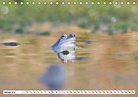 Das blaue Wunder - Moorfrösche in ihrem Habitat (Tischkalender 2019 DIN A5 quer) - Produktdetailbild 1