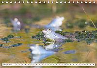 Das blaue Wunder - Moorfrösche in ihrem Habitat (Tischkalender 2019 DIN A5 quer) - Produktdetailbild 2