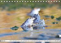 Das blaue Wunder - Moorfrösche in ihrem Habitat (Tischkalender 2019 DIN A5 quer) - Produktdetailbild 7