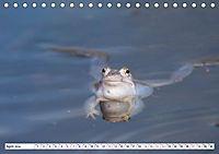 Das blaue Wunder - Moorfrösche in ihrem Habitat (Tischkalender 2019 DIN A5 quer) - Produktdetailbild 4