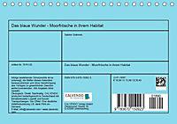 Das blaue Wunder - Moorfrösche in ihrem Habitat (Tischkalender 2019 DIN A5 quer) - Produktdetailbild 13