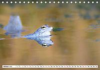 Das blaue Wunder - Moorfrösche in ihrem Habitat (Tischkalender 2019 DIN A5 quer) - Produktdetailbild 10
