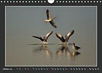Das faszinierende Reich der Vögel (Wandkalender 2019 DIN A4 quer) - Produktdetailbild 10
