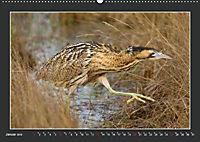 Das faszinierende Reich der Vögel (Wandkalender 2019 DIN A2 quer) - Produktdetailbild 1