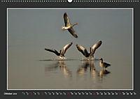 Das faszinierende Reich der Vögel (Wandkalender 2019 DIN A2 quer) - Produktdetailbild 10