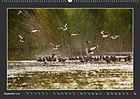 Das faszinierende Reich der Vögel (Wandkalender 2019 DIN A2 quer) - Produktdetailbild 9