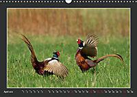 Das faszinierende Reich der Vögel (Wandkalender 2019 DIN A3 quer) - Produktdetailbild 4