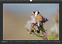 Das faszinierende Reich der Vögel (Wandkalender 2019 DIN A3 quer) - Produktdetailbild 2