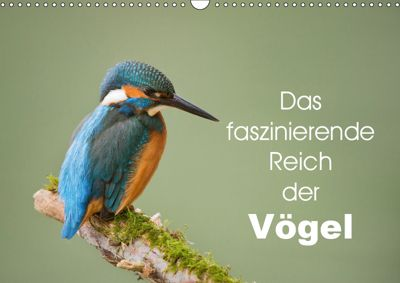Das faszinierende Reich der Vögel (Wandkalender 2019 DIN A3 quer), Johann Schörkhuber