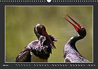 Das faszinierende Reich der Vögel (Wandkalender 2019 DIN A3 quer) - Produktdetailbild 7
