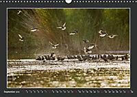 Das faszinierende Reich der Vögel (Wandkalender 2019 DIN A3 quer) - Produktdetailbild 9