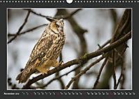 Das faszinierende Reich der Vögel (Wandkalender 2019 DIN A3 quer) - Produktdetailbild 11