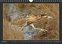 Das faszinierende Reich der Vögel (Wandkalender 2019 DIN A4 quer) - Produktdetailbild 1