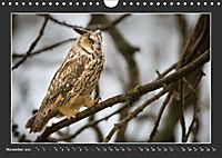 Das faszinierende Reich der Vögel (Wandkalender 2019 DIN A4 quer) - Produktdetailbild 11