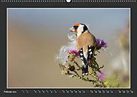 Das faszinierende Reich der Vögel (Wandkalender 2019 DIN A2 quer) - Produktdetailbild 2