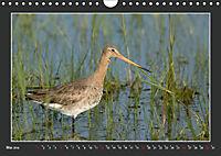 Das faszinierende Reich der Vögel (Wandkalender 2019 DIN A4 quer) - Produktdetailbild 5