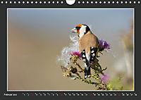 Das faszinierende Reich der Vögel (Wandkalender 2019 DIN A4 quer) - Produktdetailbild 2