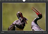 Das faszinierende Reich der Vögel (Wandkalender 2019 DIN A4 quer) - Produktdetailbild 7