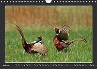 Das faszinierende Reich der Vögel (Wandkalender 2019 DIN A4 quer) - Produktdetailbild 4