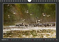 Das faszinierende Reich der Vögel (Wandkalender 2019 DIN A4 quer) - Produktdetailbild 9