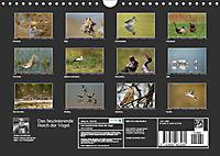 Das faszinierende Reich der Vögel (Wandkalender 2019 DIN A4 quer) - Produktdetailbild 13