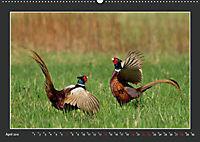 Das faszinierende Reich der Vögel (Wandkalender 2019 DIN A2 quer) - Produktdetailbild 4