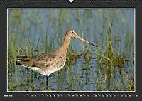 Das faszinierende Reich der Vögel (Wandkalender 2019 DIN A2 quer) - Produktdetailbild 5