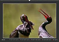 Das faszinierende Reich der Vögel (Wandkalender 2019 DIN A2 quer) - Produktdetailbild 7