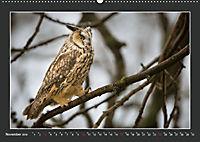 Das faszinierende Reich der Vögel (Wandkalender 2019 DIN A2 quer) - Produktdetailbild 11