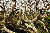 Das Geheimnis der Bäume - Produktdetailbild 9