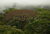 Das Geheimnis der Bäume - Produktdetailbild 6