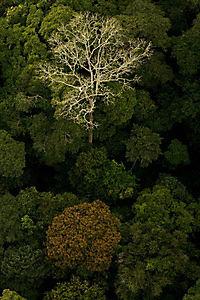 Das Geheimnis der Bäume - Produktdetailbild 7