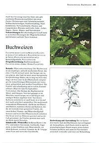 Das große Buch der Heilpflanzen - Produktdetailbild 4