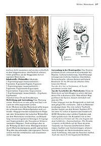 Das große Buch der Heilpflanzen - Produktdetailbild 7