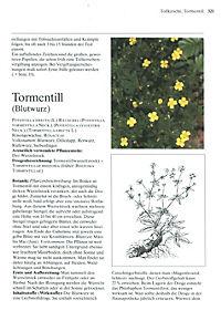 Das große Buch der Heilpflanzen - Produktdetailbild 10