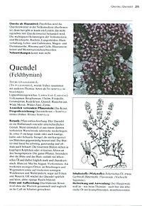 Das große Buch der Heilpflanzen - Produktdetailbild 8