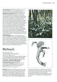 Das große Buch der Heilpflanzen - Produktdetailbild 3