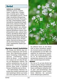 Das große Lexikon Kräuter & Gewürze - Produktdetailbild 4